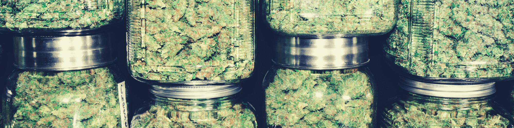 marijuana in glass jars